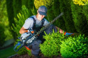 Apopka Lawn and Tree Service